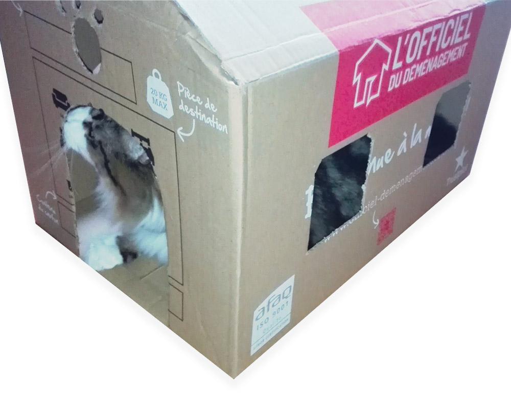 maison-carton-caht-final2.jpg